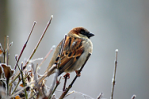 sparrow-bird-animal-nature-86591