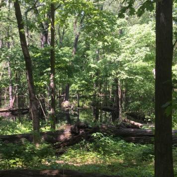 2 goose on dam in woods