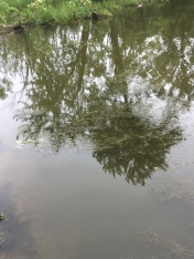 tree reflections in the river nearby