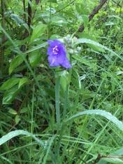wildflower, fen
