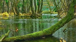 swamp-trees-803x452