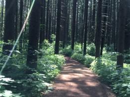 1 blog woods