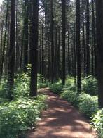 2 blog woods