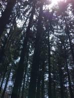 3 blog woods