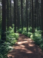 4 blog woods